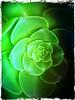 Full of green (Uscè (OFF,OFF!!!!!)) Tags: flowers friends light italy white flower macro green texture nature colors photo europe perspective jesi eugenio iphone4 staffolo coppari mygearandme mygearandmepremium mygearandmebronze ringexcellence uscè