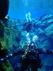 Diving Silfra 3