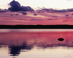 Sky reflections (Dirigentens) Tags: pink sunset sea 120 film beach water strand seaside waterfront purple sweden rosa velvia sverige vatten hav solnedgng rvp kungsbacka halland pentax67 greatphotographers strandkant skr torkelstorp rubyphotographer mygearandme mygearandmepremium mygearandmebronze mygearandmesilver mygearandmegold mygearandmeplatinum mygearandmediamond greaterphotographers greatestphotographers ultimatephotographers smcpentax67200mmf4 ruby10 ruby15 rememberthatmomentlevel1 rememberthatmomentlevel2 rememberthatmomentlevel3 fuichromevelvia100rvp