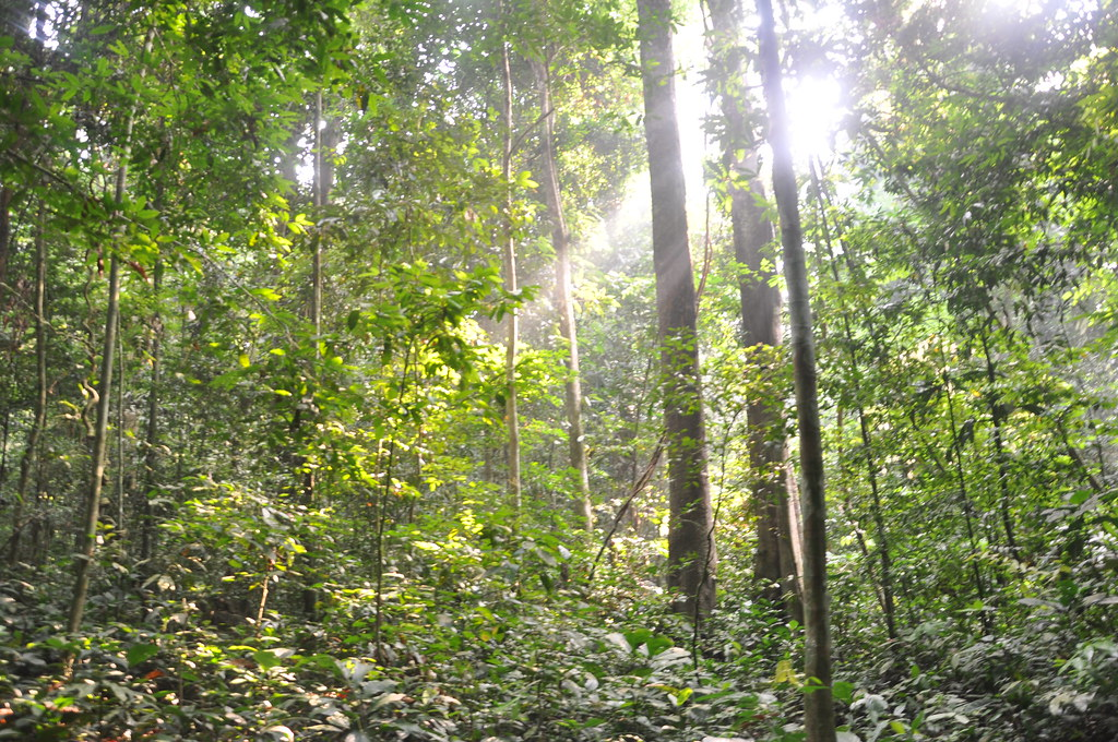 Light through the trees, Taman Negara National Park, Malaysia