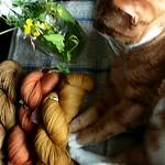 resultatet av svampfärgningen 16 juli 2012 thumbnail