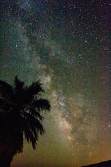 The Milky Way and a plam tree. Borrego Palm Canyon in Anza-Borrego Desert State Park. (slworking2) Tags: park way stars geotagged desert state via galaxy astrophotography astronomy anzaborrego milky milkyway lactea vialactea geo:lat=3326983 geo:lon=116409152
