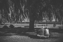 Love (zacharyrose) Tags: old bw white lake black tree love souls lunch couple picnic young willow date
