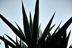 dp0q_160717_C (clavius_tma-1) Tags: dp0 quattro sigma  tokyo  leaves sky green
