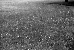 Good crop (dances_w_clouds) Tags: canonf1n fl50f14 ilfordid1111 ilfordfp4
