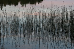 (liisatuulia) Tags: porkkala sunset reflection evening water sea