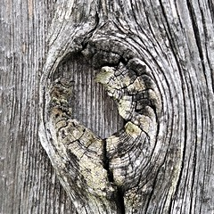 - ergraut - (HORB-52) Tags: berndsontheimer badenwrttemberg blackforest holz grau struktur textur