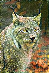 Kasimir in secret garden (Cloudtail the Snow Leopard) Tags: luchs lynx kasimir feline cat katze filter secret garden art