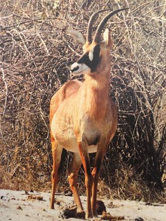 Namibia Dangerous Game Safari - Caprivi Strip 90