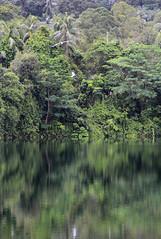 IMG_0468 (trevor.patt) Tags: palauubin singapore quarry heron
