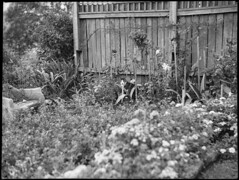 Mrs OE Friend's garden, January 1939, Sam Hood (State Library of New South Wales collection) Tags: statelibraryofnewsouthwales