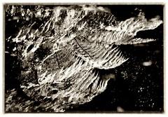 Melbourne - Parks and Gardens - Images by PhotoArt Gallery VIDIM (PhotoArt Gallery VIDIM) Tags: city morning family flowers trees our light sky sun white milan green heritage love water weather yellow gardens clouds digital reflections fun photography daylight flora nikon memorial moments colours spirit space memories grandfather parks dana australia melbourne things images victoria nicholas grandson changing passion sharing vlade alfred years rays generations capture vera artworks shootout splendour planeta raising slavica iva aborigines milosh goca godine sloveni nae steva dushan zemlja roditelji putokazi tragovi photoartvlade dia 042012