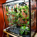 Intermediate vivarium