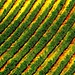 AG12 Scala Marco la vigna - zenevredo - 2006 - categoria agricoltura