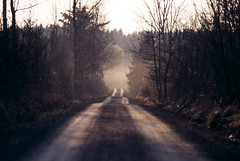 (xbacksteinx) Tags: morning winter light mist slr misty analog forest sunrise 35mm early hp woods track mood moody path slidefilm expired nikonf3 135mm fujiprovia100 nikkor135mmf28ai