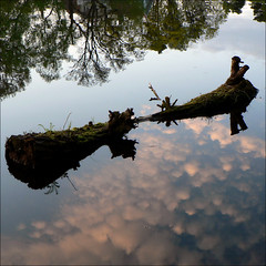 Reflecting skies (*Kicki*) Tags: trees sky reflection water clouds square moss log sweden stockholm 2010 sickla nacka sicklasjn