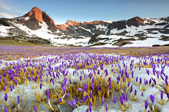 Spring Carpet (Pavel Pronin) Tags: flowers lake snow mountains ice spring peak bulgaria rila  rilamountain    rilanationalpark panparks