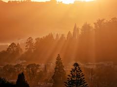 Winter Morning North Dunedin (Ian@NZFlickr) Tags: morning winter mist home gardens botanical smog bravo north dunedin fires warming