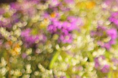 Watch out, Monet! A little bokeh happiness from the Knoxville Farmers Market :) (WeeLittlePiggy) Tags: