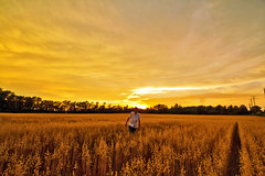And The World Was Gold (Matt Molloy) Tags: trees sunset red sky orange sun ontario canada me field grass yellow clouds myself fun photography golden timelapse saturated bath wheat country rich powerlines colourful lovelife agoodday mattmolloy i
