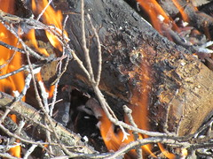 Put Another Log on the Fire (5of7) Tags: wood orange brown hot detail yellow canon fire grey log flames powershot burning campfire flame burn fav 4fav sx30