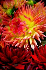 Flowers at a Flower Stall (JohnCramerPhotography) Tags: red flower yellow flora magenta