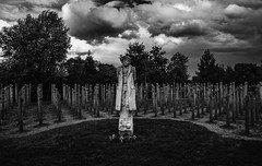 Shot at Dawn Monument (cotty332000) Tags: monument alrewas nationalmemorialarboretum shotatdawn