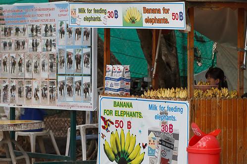 banana for elefant