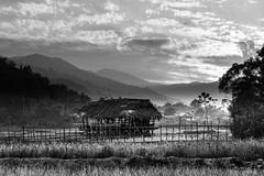 Daporijo fields (clareacer2013) Tags: daporijo