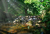 Roath Park  Cardiff (http://www.grazynabudzenphotography.co.uk/) Tags: roath park cardiff landscapeseascape landscape sescape southwales outdor grass grenn waterscape long time grazynaphotography