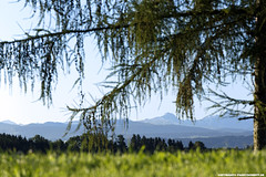 FICHTE VOR BERGGIPFEL (PADDYSCHMITT.DE) Tags: damlsermittagsspitze damls bergpanorama fichte baum sommerwiese