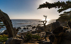 Pescadero Point 1 (Morten Kirk) Tags: mortenkirk morten kirk california californien usa 2016 travel holiday vacation sony a7rii a7r ii sonya7rii ilce7rm2 zeiss batis 25mm f2 225 distagon batis225 batis25mmf2 zeissbatis225 17 mile drive monterey del monte forest north pacific coast coastline