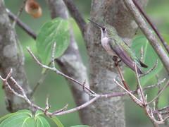 Hummingbird  IMG_7844 (PRS North Star) Tags: birds backyardbirds hummingbirds parkerdamstatepark