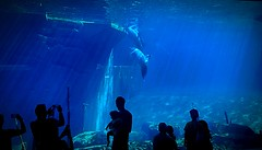verkehrte Welt (barmicity) Tags: delphine tiergarten nrnberg aquarium silhouetten