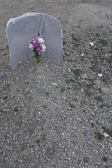 Con el corazon partido. (elojeador) Tags: tumba losa epitafio lpida flor ramo tmulo tierra grava piedra mata antoniosorianocriso cementerio cementeriodeljar ay elojeador