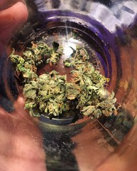 Maria Juana (cotecst) Tags: marihuana weed