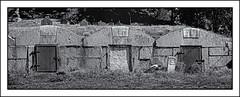 Old North (jores59) Tags: weymouth weymouthma cemetery northweymouthcemetery kodakmedalistii medalistii medalist mediumformat 620film ilfordfilm