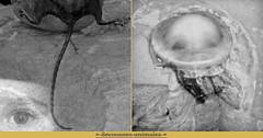 Animal Jerks (andrefromont/fernandomort) Tags: andrefromontfernandomort andrfromont fernandomort diptych diptyque meditation mditation mduse