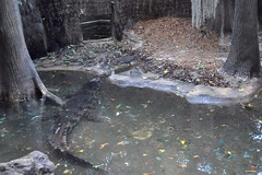 false gharial (markusOulehla) Tags: bronxzoo nyc newyorkcity markusoulehla nikond90 citytrip thebigapple usa