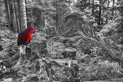 Of Parrots & Portals (fishmonger45) Tags: abstract photoshop photomatix parrots bw hdr greatphotographers