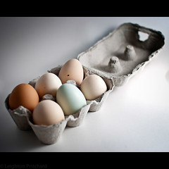 The Curate's Egg (widdowquinn) Tags: blue food white university foodporn eggs standrews lightbox chaplain eggcarton oeufs strobist universitychaplain