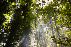 Light in the forest (Theophilos) Tags: trees light nature leaves forest crete rays rethymno