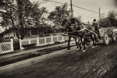 .. (Trees n stuff) Tags: bw horse romania nikonfe 1990 36mm