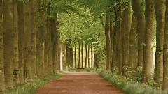 Woldenpad (andzwe) Tags: wood copyright holland netherlands dutch forest landscape  nederland panasonic romantic bos fz drente drenthe landschap fz50 panasonicdmcfz50 panasoniclumixdmcfz50 andzwe andzwe woldenpad