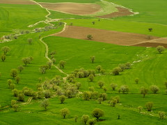 Green Path (SinaK) Tags: trees green iran khoramabad   irannature lorestan   sinak irannaturephoto photobysinakavian