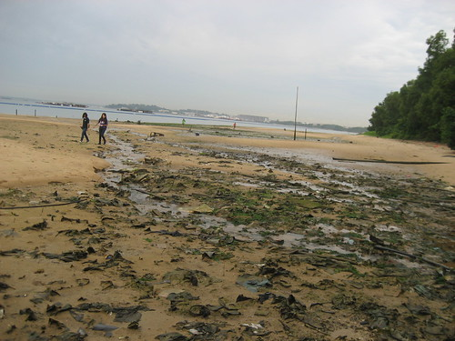 06world-oceans-day-cleanup-recce_pasir_ris_6-8_27may2012[nks]
