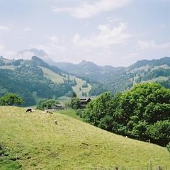 picture of Switzerland (joytrip*) Tags: heidi countryside goat croft gruyeres