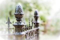 When your mouth drops open, click the shutter - Harlod Feinstein (Peter Jaspers (sorry less time to comment)) Tags: holland netherlands dutch fence bokeh fences olympus fenced zuiko lr 2012 lightroom gouda zuidholland hff shallowfocus m43 mft southholland guda epl1 45mm18 fencefriday happyfencefriday fencedfriday frompeterj©