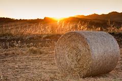 Countryside sunset ( rd ) Tags: corn nikon farm grain bead sicily hay bale chaff sicilia haybale grano fieno fattoria hayrick