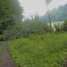 P7020859_1 umgestürzter Baum